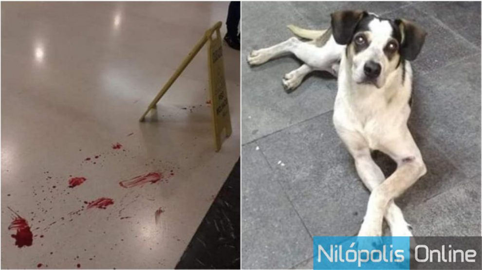CACHORRO ASSASSINADO